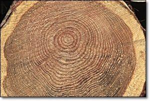 銘木 天然木