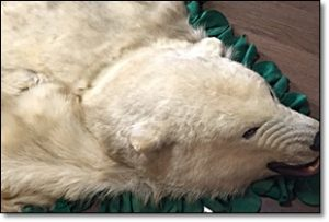 白熊 剥製