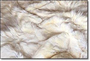 白熊 毛皮